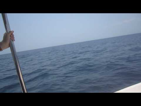 Blue whales whilst out scuba diving today! Taprobane Divers Trincomalee Sri Lanka!