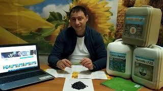 Засухоустойчивый ранний подсолнечник Кардинал 105 дней. Урожайный гибрид 32ц/га олийность 50-52%. Заразиха A-F. Экстра от компании ТД «АВС СТАНДАРТ УКРАЇНА» - видео 2