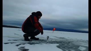 Календарь ловля щуки на жерлицы по первому льду