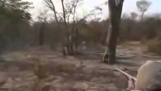 Охота на льва. Если промахнёшься, то точно загрызёт. Лев после выстрела бежит в сторону охотников.
