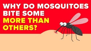 Scientists Finally Know Why Mosquitoes Bite Some People More Than Others - Mystery Revealed