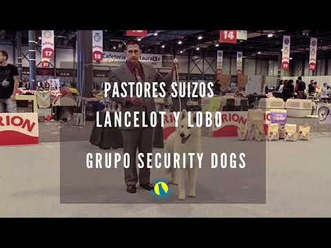 Lobo y Lancelot en Security Dogs