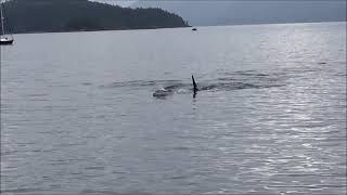 Whale Watching bei Telegraph Cove auf Vancouver Island