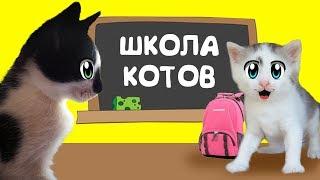 КОТ МАЛЫШ И КОШЕЧКА МУРКА идут в КОШАЧЬЮ ШКОЛУ ! УРОКИ для котов НОВЫЙ ЧЕЛЛЕНДЖ для  котенка
