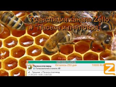 """Трансляция канала Zello """"Пасека и пчеловод"""". (Обзор за день) 21/04/2019-1"""