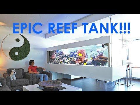 RALPH'S REEF - EPIC REEF TANK IN AMSTERDAM!!
