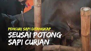 Pria Spesialis Pencuri Ternak Ditangkap Polisi seusai Memotong Sapi Curiannya