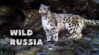 Алтай. Земля снежного барса © Иван Усанов