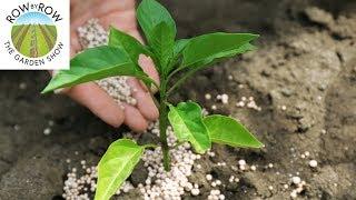 Tips and Tricks for Fertilizing Your Vegetable Garden