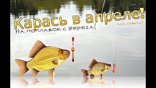 Рыбалка секреты ловли карася ранней весной