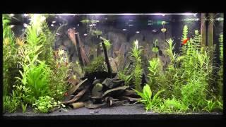 led aquarium beleuchtung daytime cluster control mit tageslichtsimulator easy time controll. Black Bedroom Furniture Sets. Home Design Ideas