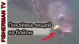 Ваши рыбки клевали да вы их поймать не дали