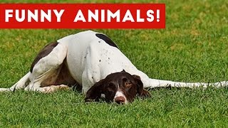 Funniest Animal Bloopers Fails & Outtakes Compilation January 2017  Funny Pet Videos