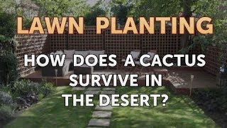 How Does a Cactus Survive in the Desert?