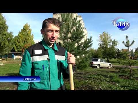 Посадка деревьев 19 сентября в Благовещенском районе РБ