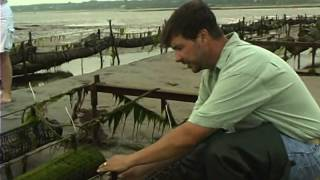 Shellfish Aquaculture: Tools, Tips And Techniques