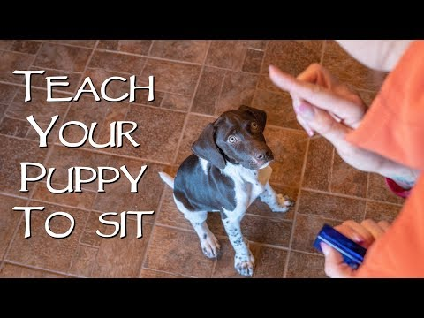 How To Teach Your New Puppy To Sit