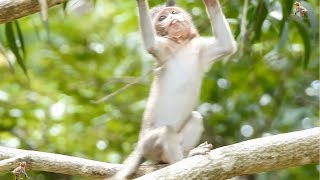 Great Mummy Steals Baby From Crazy Monkey Daily Monkeys Man #673