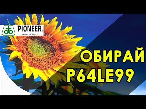 Семена P64LE99 от компании Pioneer