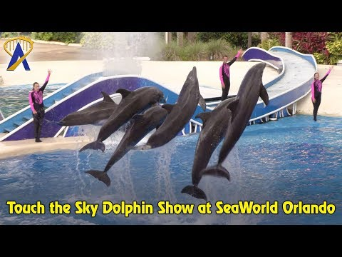 Touch the Sky Dolphin Show at SeaWorld Orlando