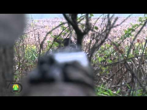 Krocaní lov