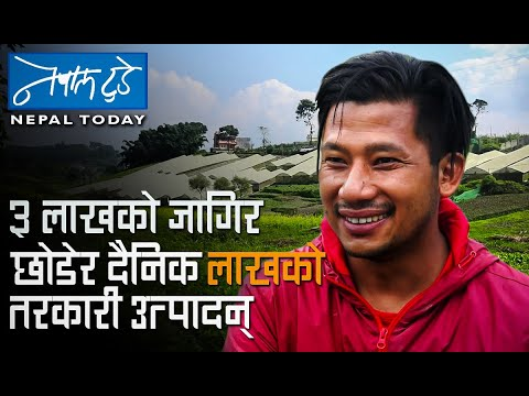 तीन लाखको जागिर छोडेर दैनिक लाखको तरकारी उत्पादन..[ The Nepal today ] Agriculture in Nepal