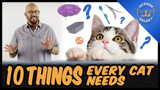 Everything You Need for your New Cat