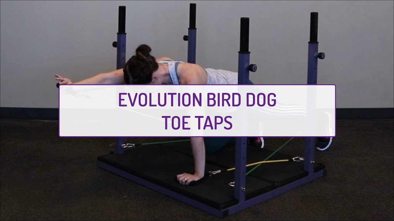 Evolution Bird-Dog Toe Taps