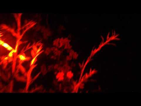 Helgamite - The Apiarist