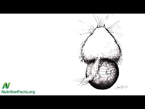 Antibiotika für eine Prostata