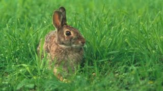 How To Protect Your Garden From Rascally Rabbits