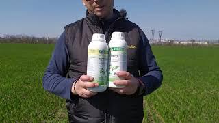 СТИМПО - Стимулятор Роста для листовой подкормки обработки риса, жита, овса, тритикале. Норма 20-25 мл/га. от компании ТД «АВС СТАНДАРТ УКРАЇНА» - видео 3