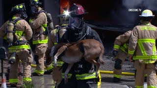 Firefighters Rescue Dogs From Burning Home In Carlsbad