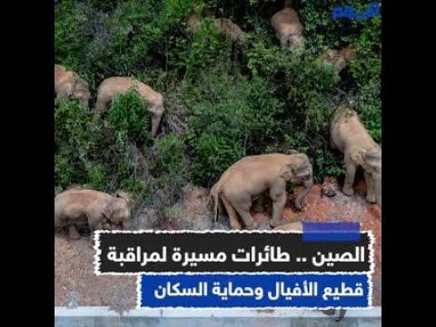 الصين .. طائرات مسيرة لمراقبة قطيع الأفيال وحماية السكان