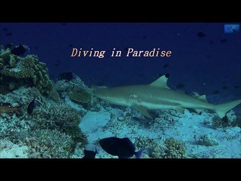 Conheça a Incrível Fauna das Ilhas Maldivas