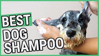 Best Dog Shampoo | TOP 7 Dog Shampoos (2020) 🐶 ✅