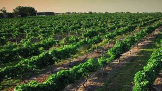 GO TEXAN WineCast - Bluebonnet Wine Trail