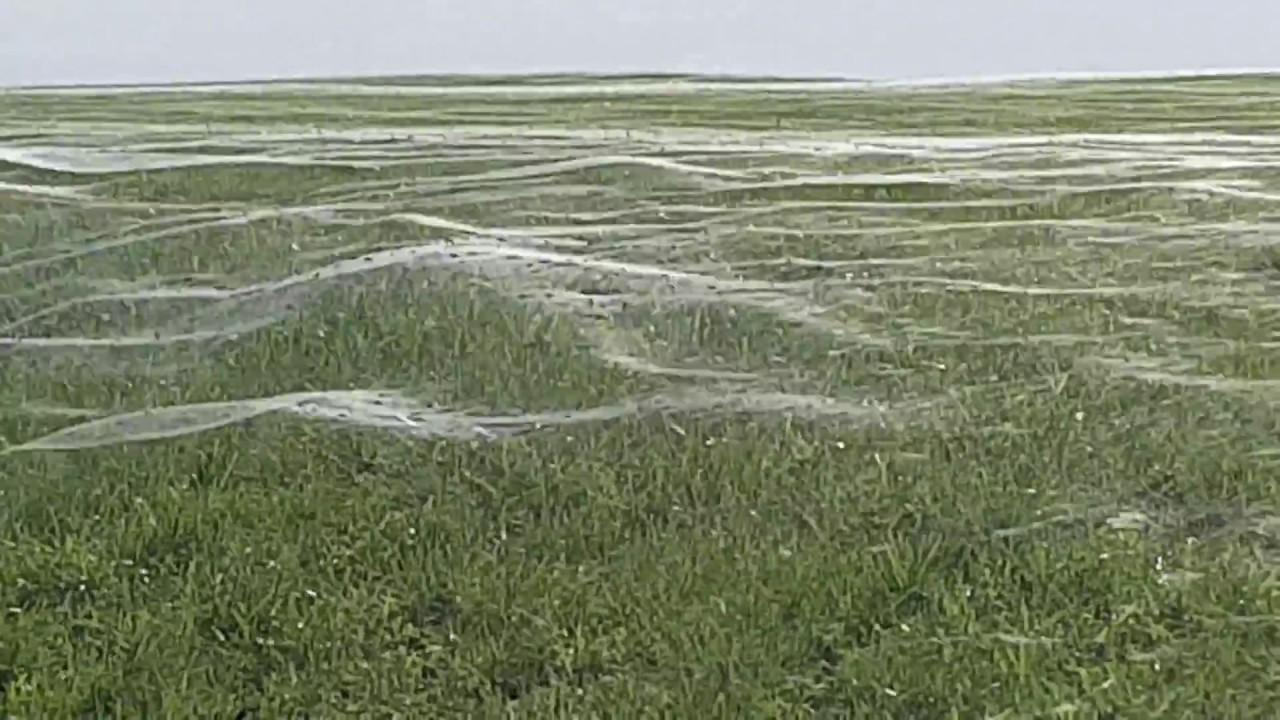 Spiderwebs, Everywhere