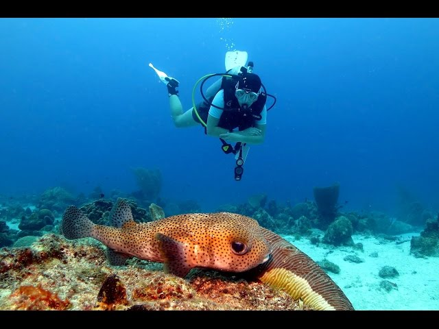 Diving Curacao - Sun Reef Village & The Beaches 2014