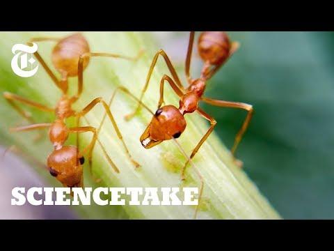 Jak se mravenci vyhýbají zácpám