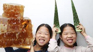 Mukbang Aloe Honeycomb  Lidah Buaya Aloès หางจระเข้ アロエ  Lô Hội 알로에 벌집꿀 TwinRoozi 쌍둥이루지