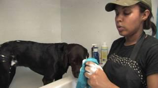 Dog Care : Flea Treatments For Dogs