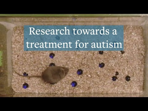 CRISPR reduces autism symptoms in mice