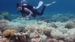 Why is the Great Barrier Reef in danger?