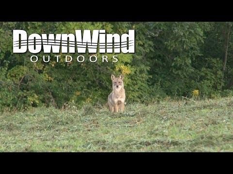 Eastern Coyote Hunting:  Hawg'd (DownWind Outdoors)
