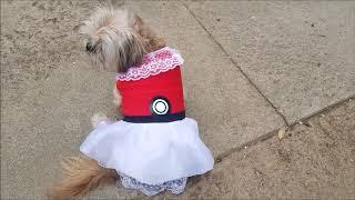pokemon dog costume diy