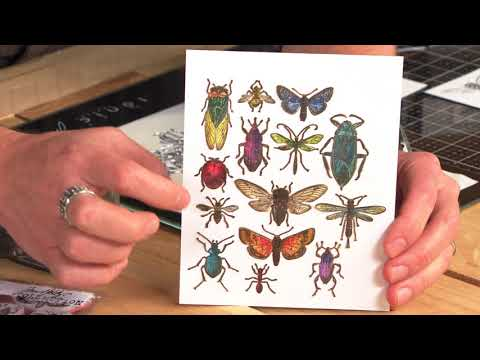 DID YOU KNOW? Sizzix Entomology Framelits with Tim Holtz