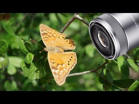 I Finally Bought the Sony 30mm F/3.5 Macro Lens