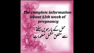 The Complete Information About 12th Week Of Pregnancy ||development N Growth