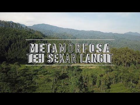 Ini Teh Terbaik Indonesia dengan Rasa Mendunia